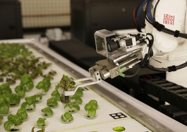 Robots plantan lechugas en California, EEUU