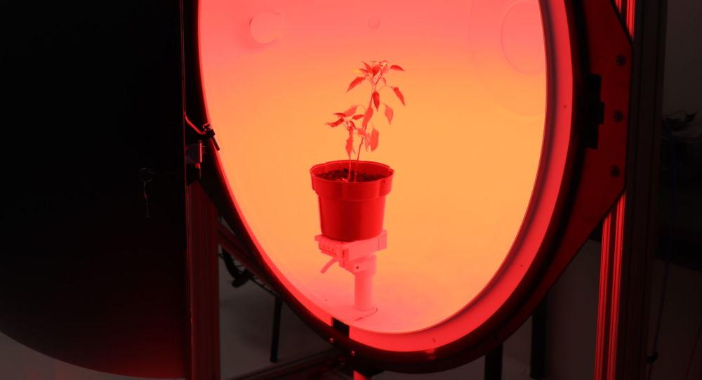 Gracias a esta investigación de científicos mexicanos, es posible que en un futuro en el espacio se puedan comer vegetales frescos