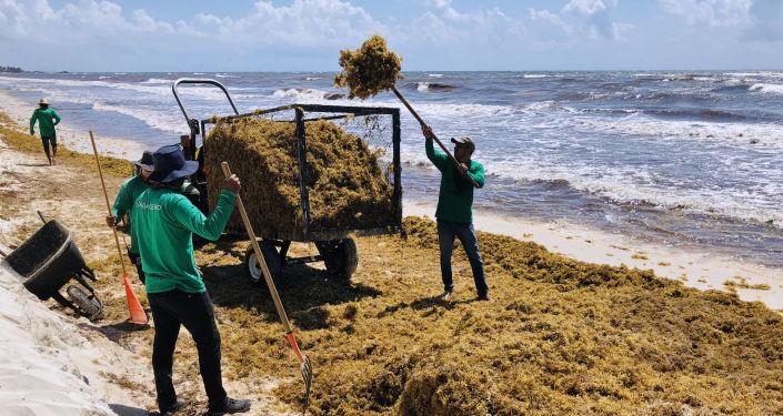 Sargazo en la costa caribeña de México