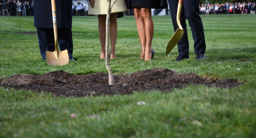 El árbol que el presidente de EEUU, Donald Trump, y el presidente de Francia, Emmanuel Macron, plantaron en el jardín de la Casa Blanca