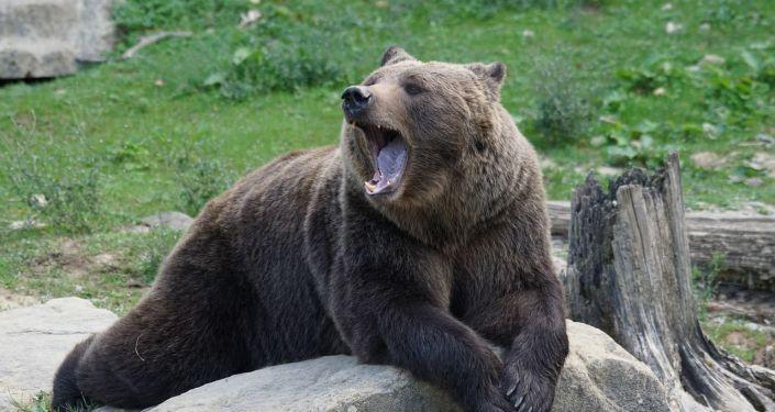 Un oso, referencial