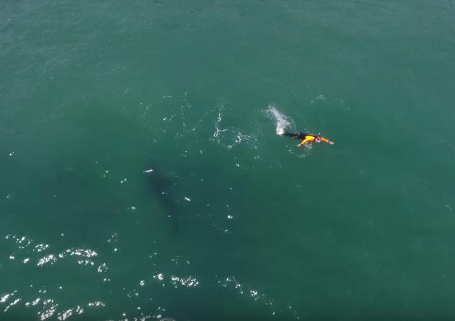 Nada en el mar y se encuentra con un tiburón delante