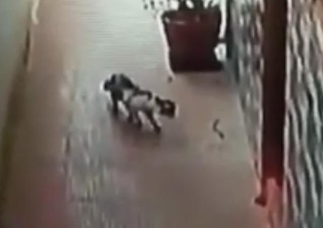 En la India un gato salvó a sus dueños de una serpiente