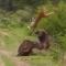 Una leona ataca a un búfalo cuando llegan refuerzos