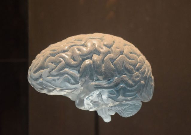 Un cerebro