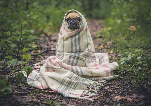 Un perrito, foto de archivo