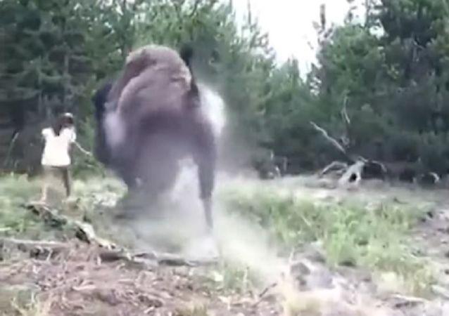 El terrorífico momento en el que un bisonte salvaje ataca a una niña