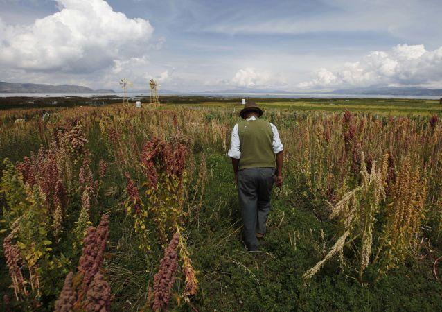 Bolivia cultivos