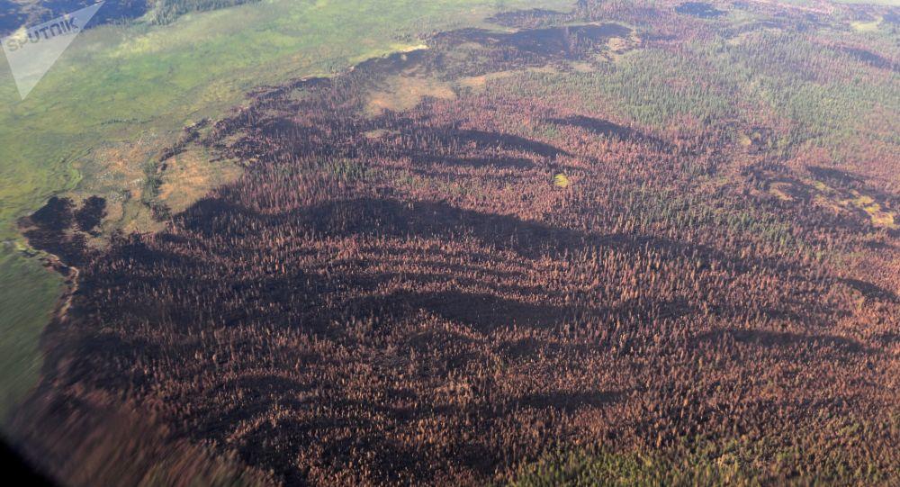 Consecuencias de incendios forestales en Siberia