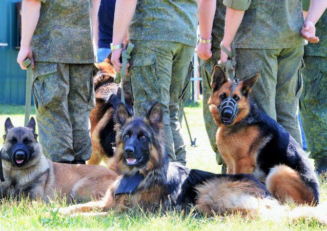 Los cinólogos y sus perros