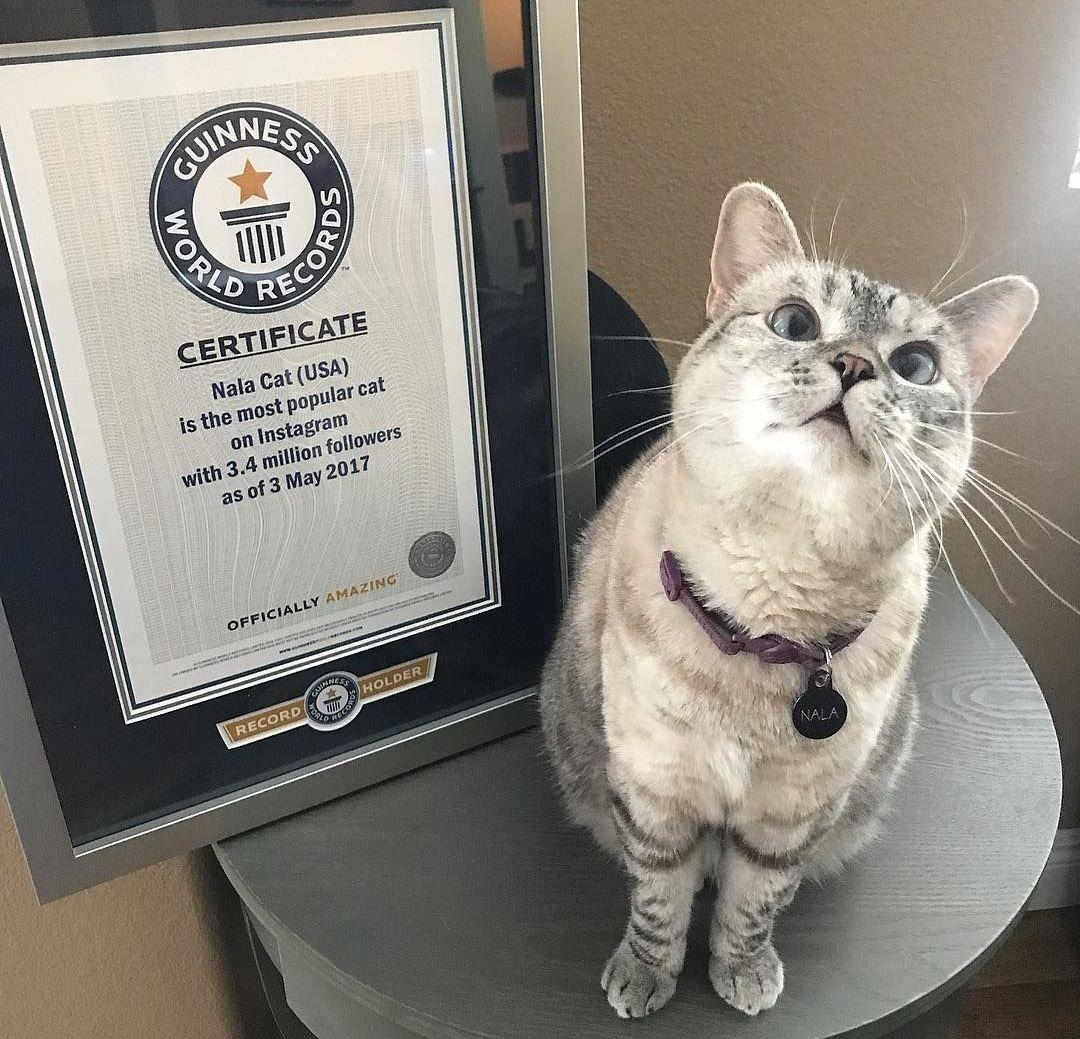 Nala posa al lado del certificado oficial del libro Guinness de los récords