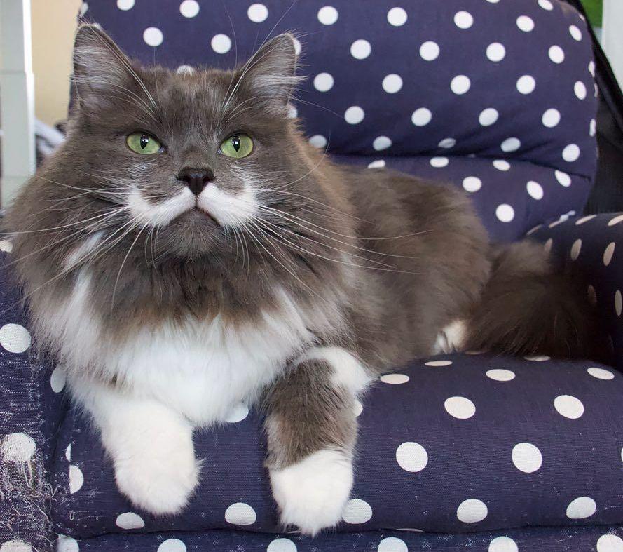 Hamilton, el gato hipster