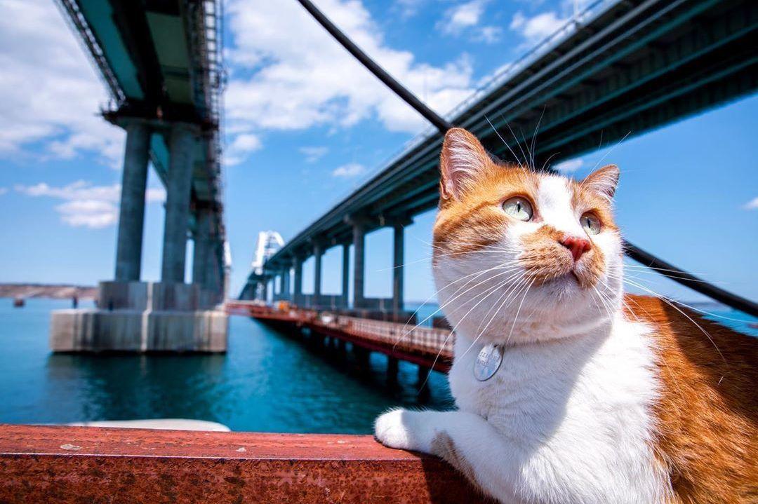 Mostik, el 'inspector peludo' del puente sobre el estrecho de Kerch