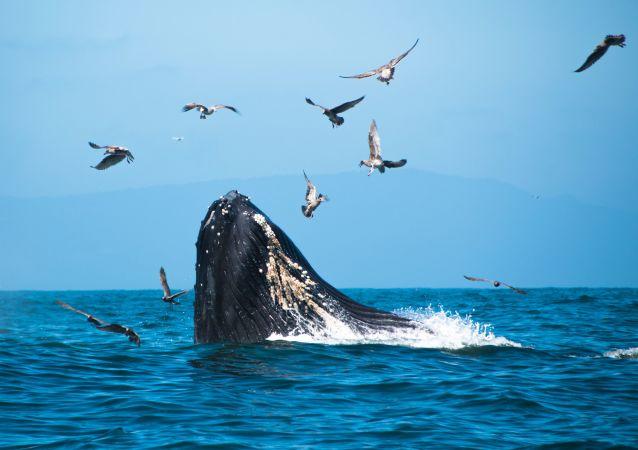 Una ballena jorobada