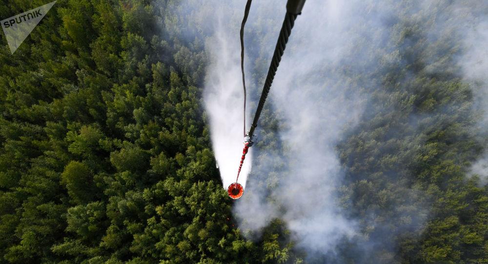 Los bosques de Siberia afectados por los incendios
