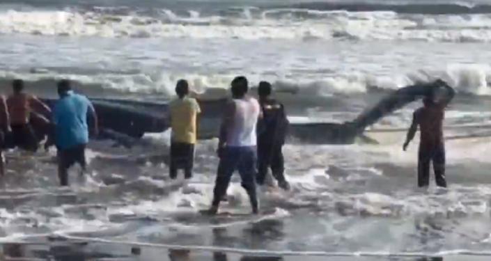 Héroes peruanos rescatan a una ballena varada