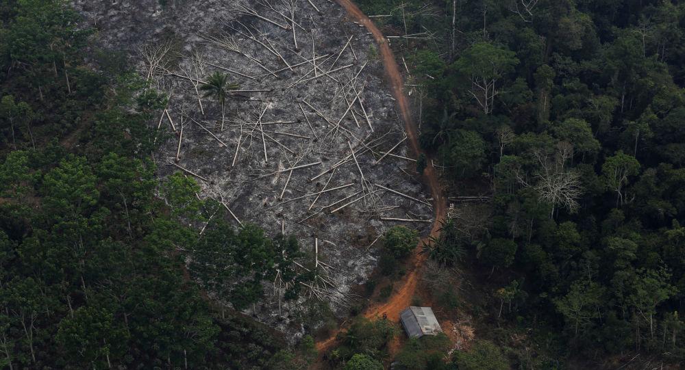 Noruega bloqueó millonarios fondos para Brasil por la deforestación de la Amazonía