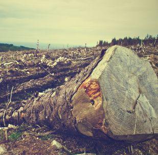 La deforestación (imagen referencial)