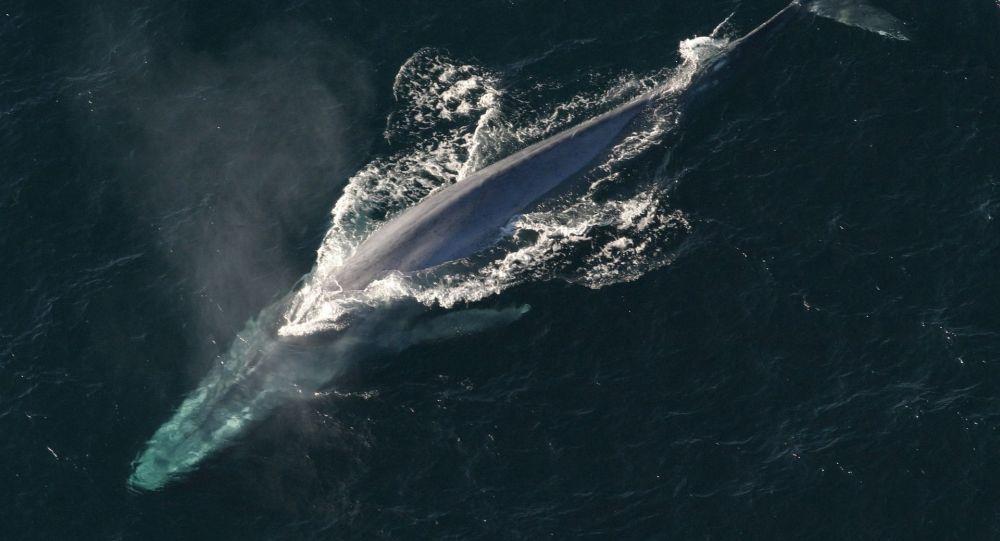 Una ballena (imagen referencial)