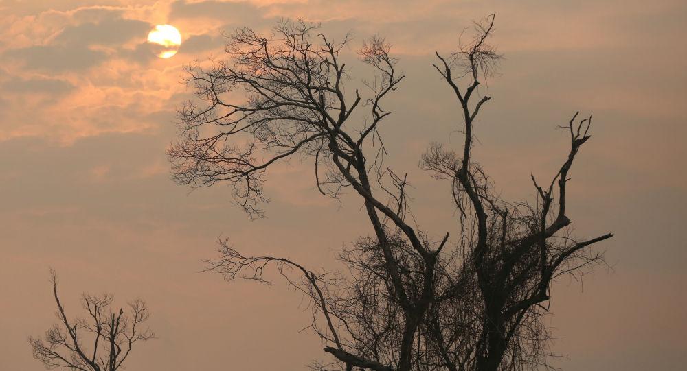 Consecuencias de los incendios forestales en Amazonía