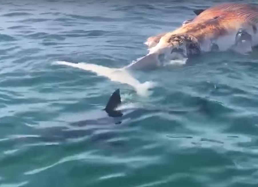 El tiburón acabó abandonando la escena del crimen