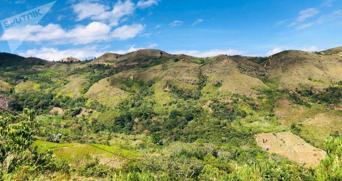 Los cultivos de coca de la Vereda La Independencia