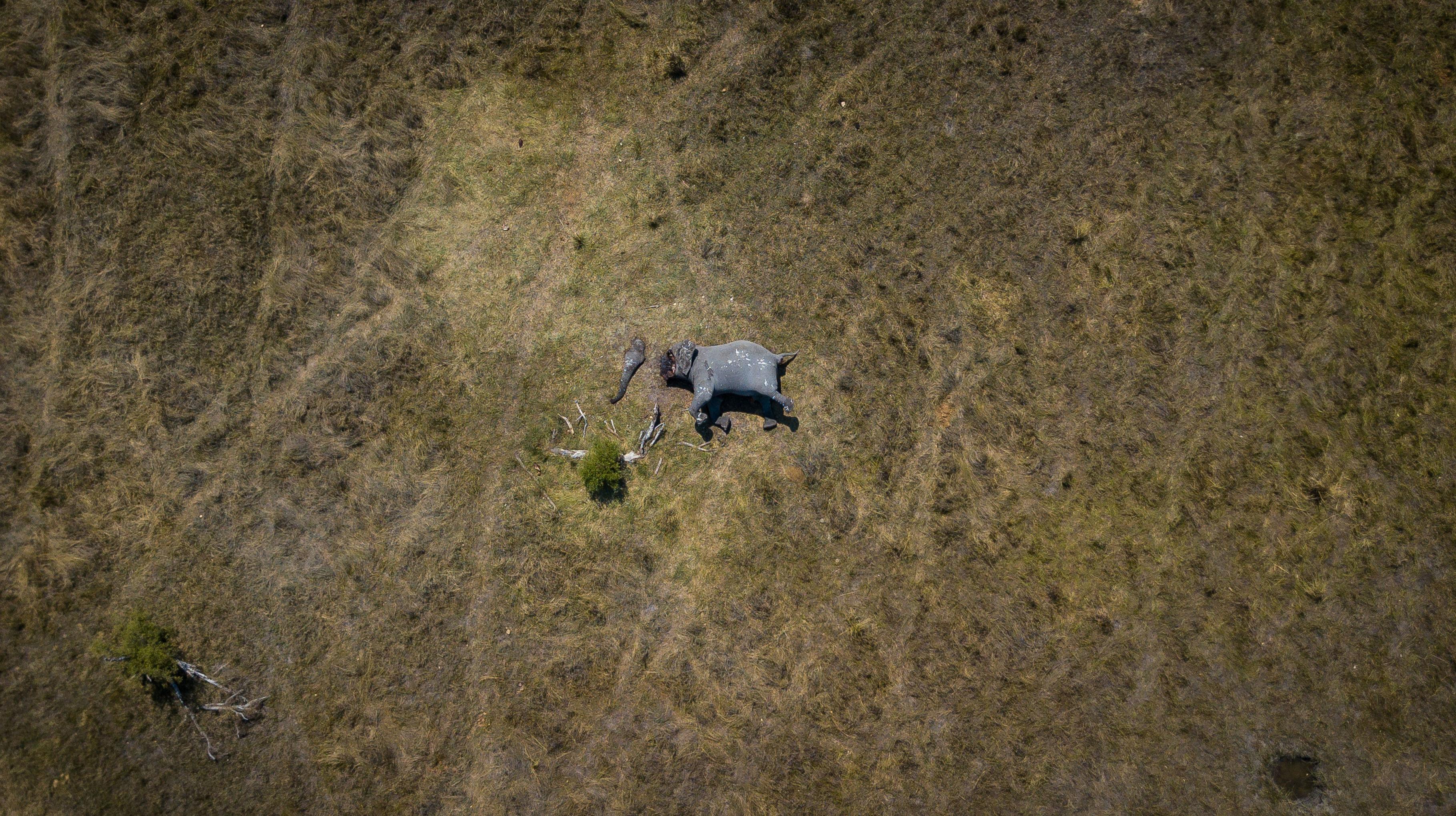 'Desconexión' por Justin Sullivan, Sudáfrica. Primer puesto en categoría 'Mi planeta'