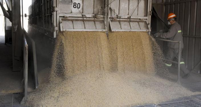 Un cargamento de soja en Argentina