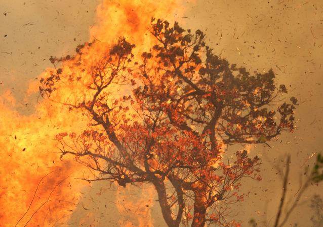 Los incendios en la Amazonía