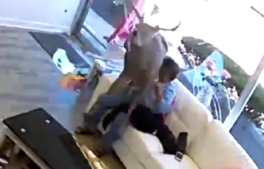 El animal asustado salta sobre una clienta de una peluquería neoyorquina