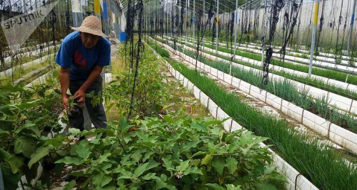 Jesús Méndez en una casa de cultivo del núcleo de desarrollo endógeno Fabricio Ojeda