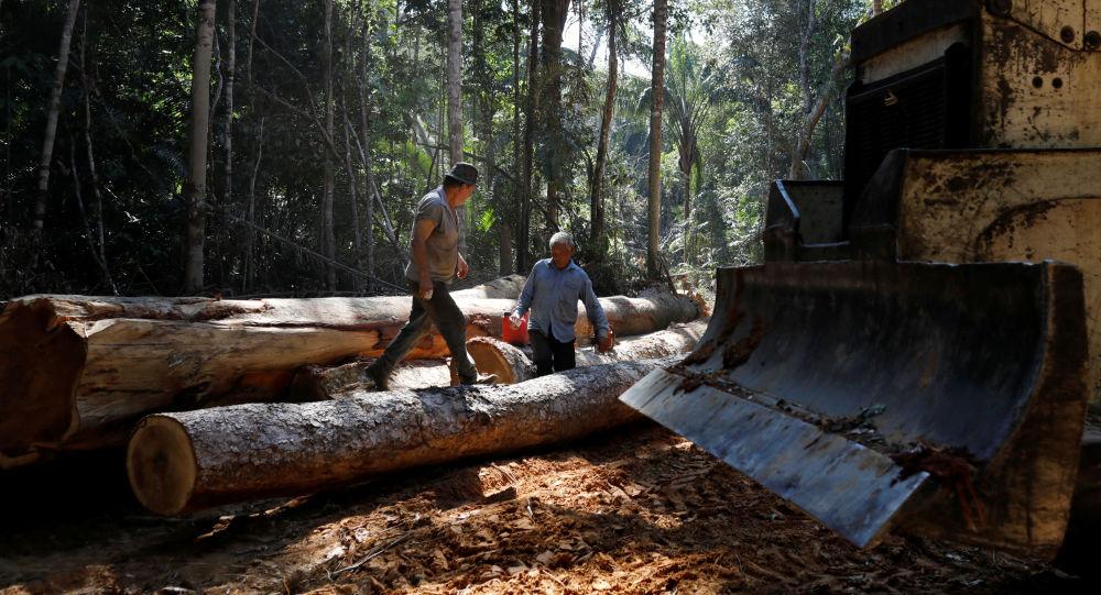 La deforestación en la Amazonía