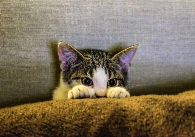 Un gato asustado
