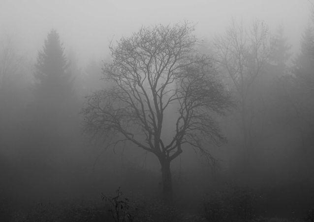 Un pantano en la niebla, imagen referencial