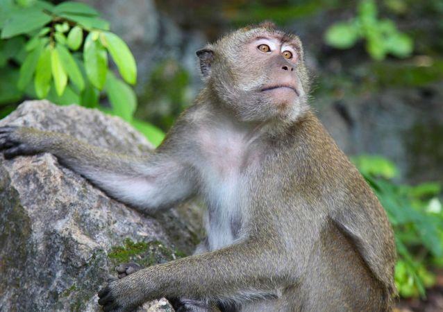 Un mono, foto de archivo