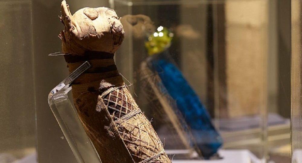 Momias felinas en Museo de Bellas Artes de la ciudad de Rennes, en la región de Bretaña, Francia