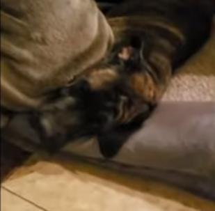 Estos perros saben hacer tonterías al estilo de los humanos