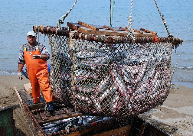 Rusia espera duplicar la producción de pescado en cinco años