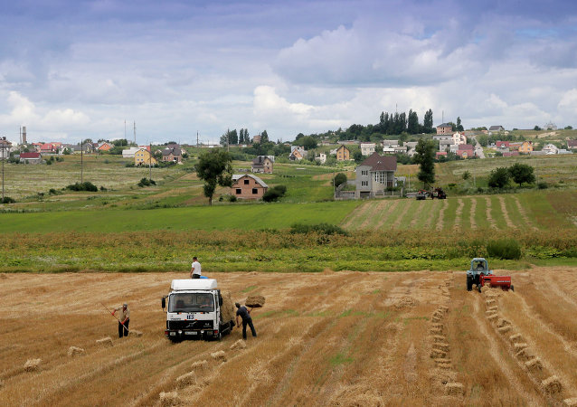 Campo agrícola al oeste de Kiev