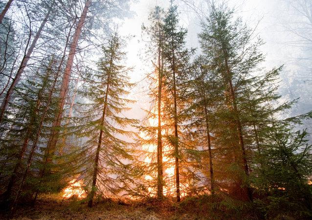Incendio en Óblast de Sverdlovsk, Rusia (2011)