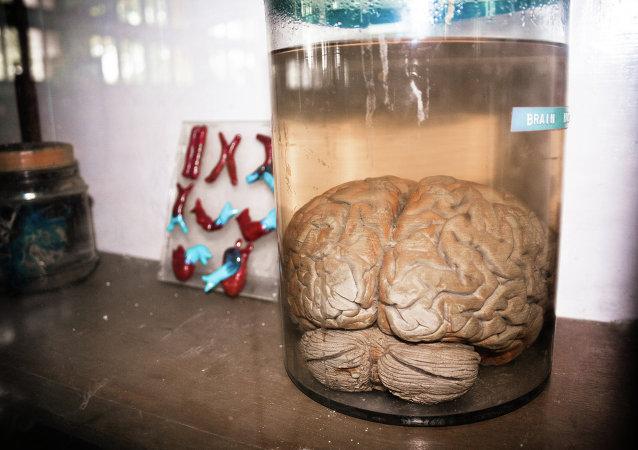 Cerebro en un frasco