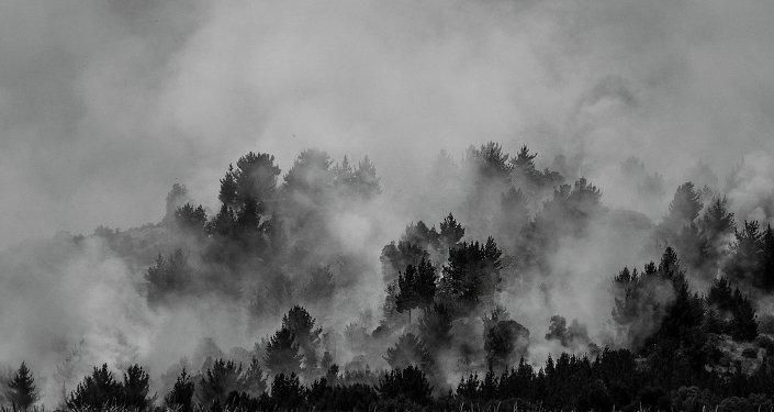 Fuerte sequía y acciones vandálicas incendian bosques de Colombia