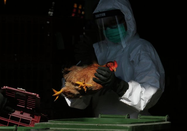 Gripe aviar en China (archivo)
