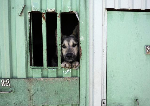En Rusia proponen duplicar multas y condenas por malos tratos a animales