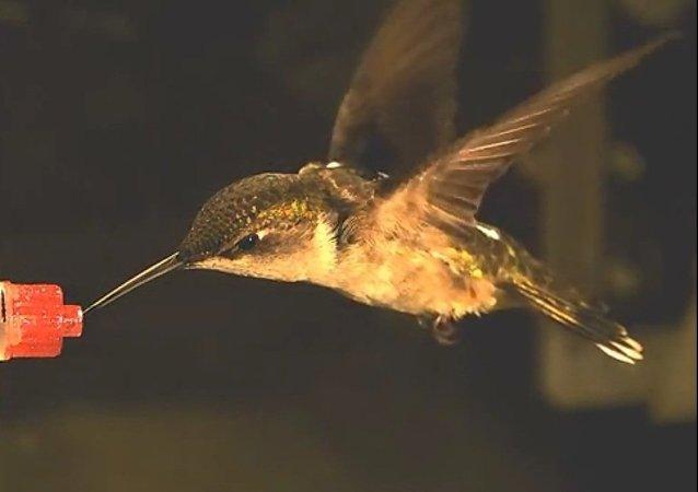 La colibrí contra el huracán