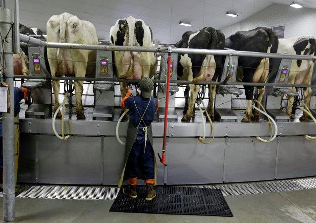 La UE pone fin a las cuotas de producción de leche