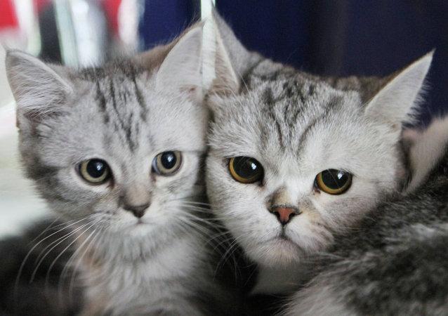 Parlamentarios rusos proponen multar por llamados a maltrato de animales