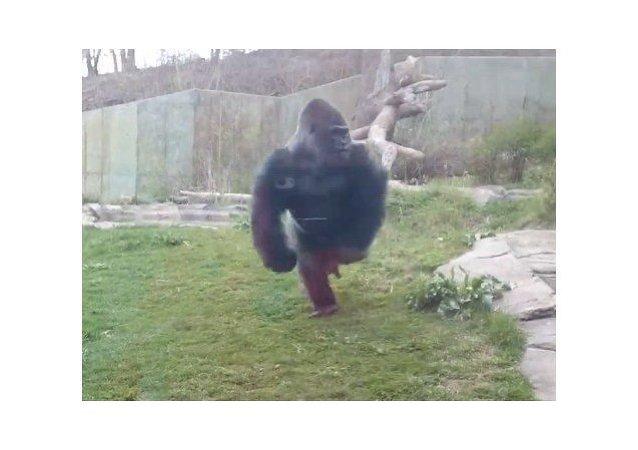 Un susto en el zoo