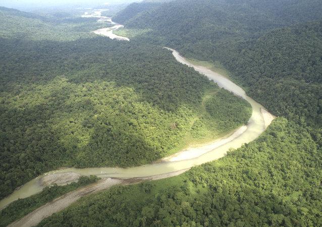 Bosques de Amazonía (archivo)