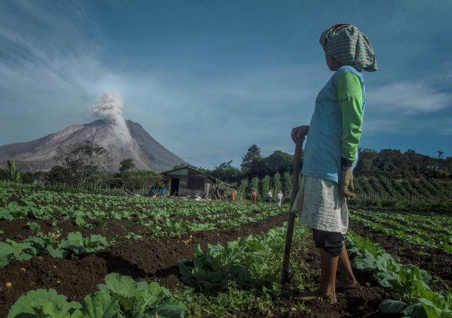 Erupción del volcán Sinabung en Sumatra, 3 de junio de 2015